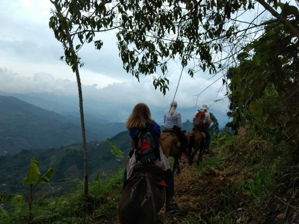 Horse riding and coffee tour