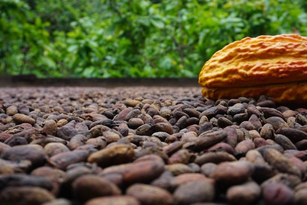 Cacao tour Medellin day trip